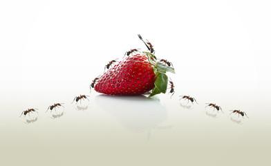 meyve zamanı