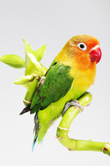 parrot and lucky bamboo