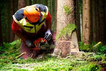 Forstarbeiter beim Baumfällen