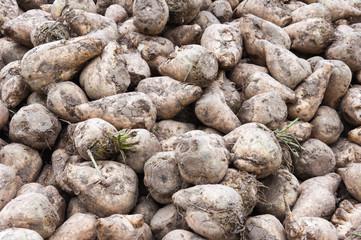 Close-up of a heap of sugar beets