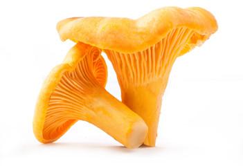 Fototapeta Edible wild mushroom - chanterelle (Cantharellus cibarius) obraz