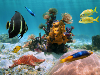 Colorful seabed in the tropics