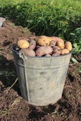 Ведро картофеля.