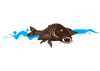 carp fish, vector illustration