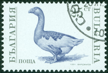 stamp printed in Bulgaria showing goose