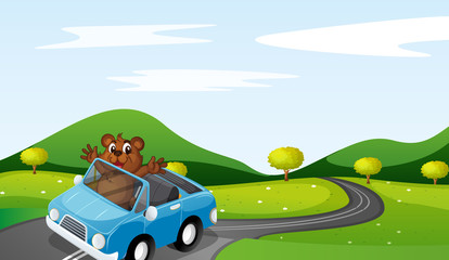 Printed roller blinds Cars bear and car