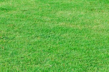 Grass is green texture
