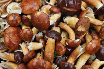 Full of mushrooms.