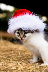 Katze mit Weihnachtsmütze / Nikolaus