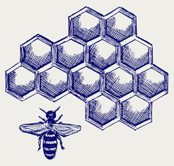 Working bee on honeycells