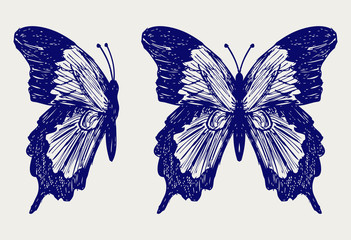 Butterfly. Doodle style