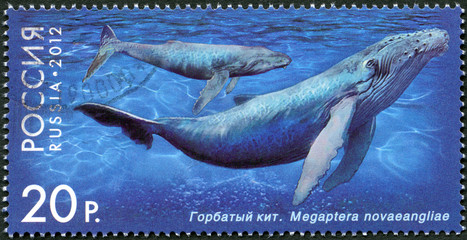 RUSSIA - 2012: shows Humpback Whale
