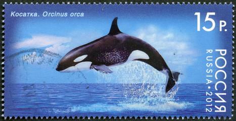 RUSSIA - 2012: shows Killer Whale