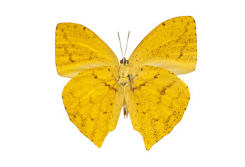 yellow butterfly isolated on a white background