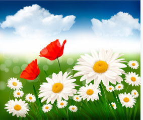 Nature background with beautiful flowers and sky.