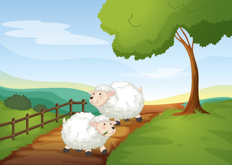 Wall Murals Ranch sheeps