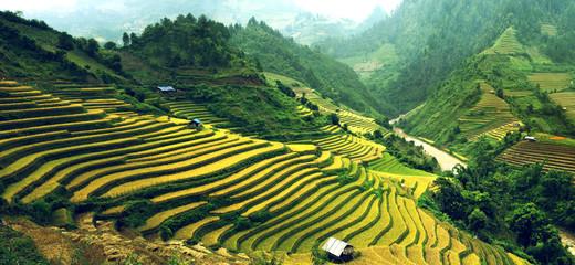 Garden Poster Rice fields Rice Terraces in Vietnam