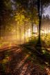 Herbst im Naturpark Saar-Hunsrück