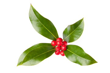 Christmas holly (Ilex) with berries, isolated on white