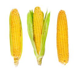 Fresh organic corn on white background