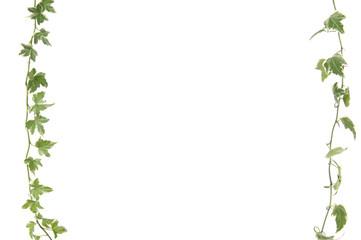 green ivy leaves frame