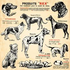 In de dag Kranten Les chiens