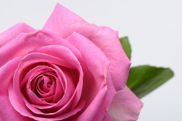 Poster de jardin Macro Close up of pink rose heart