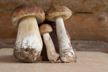 Three forest mushrooms in a wooden wall