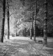 winter night landscape (black and white)