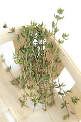 thyme herb in wooden box on white background