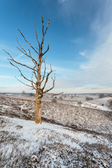 Old dead leafless tree in winter