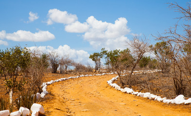 Fotoväggar - Savana road