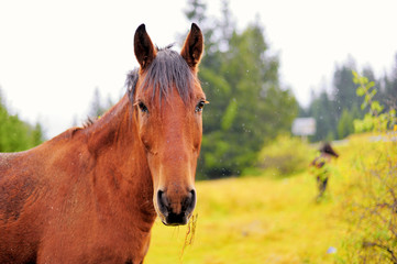 Horse in the autumn background