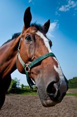 A head of a brown horse