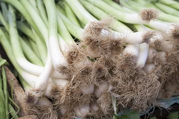 Real organic onions