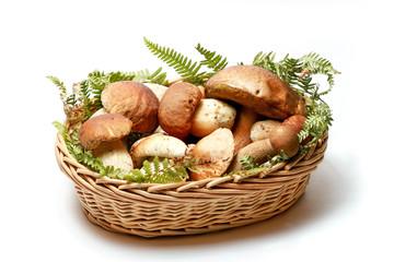 Cesto di funghi procini