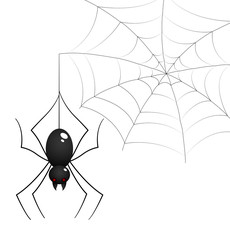Spider and Web Illustration