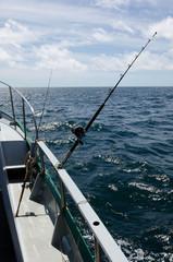 Fishing Safari in New Zealand