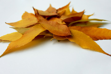 Picture of beautiful autumn leaves isolated on white