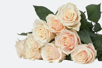 9 light pink roses