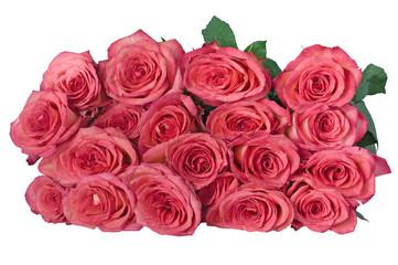 19 roses