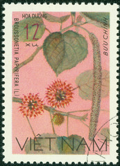 stamp printed in Vietnam shows Paper Mulberry