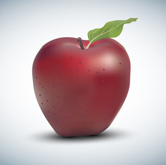 Realistic vector red apple