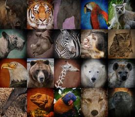 Wild Zoo Animal Squares
