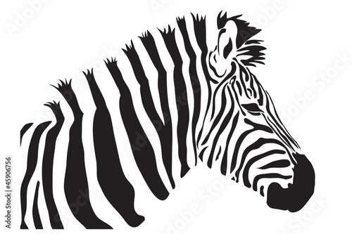 Zebra vector outline silhouette stock photo and royalty free zebra vector outline silhouette pronofoot35fo Gallery