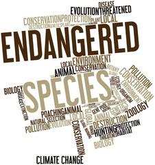 Word cloud for Endangered Species