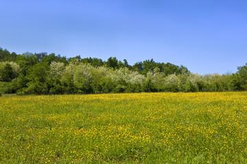Wall Mural - Pré, prairie, campagne, vert, nature, verdure, saison, été