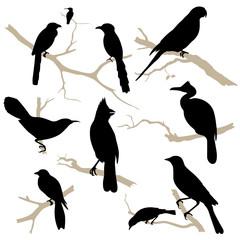 Birds silhouette set. Vector.