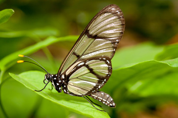 butterfly posing on grass