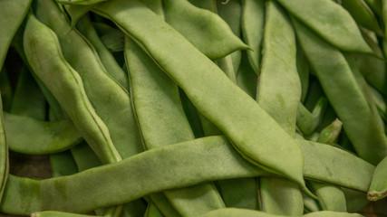 Fagioli (Phaseolus vulgaris)